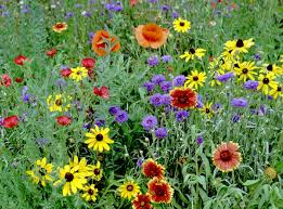 premium wildflower seeds for the northeast