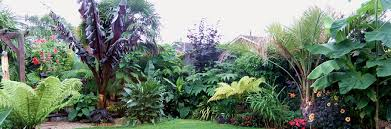 Small Picture Homepage Hardy Tropicals UK