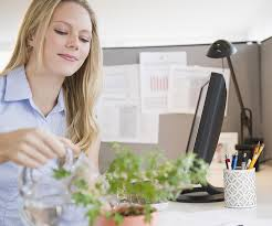 stunning feng shui workplace design. 5 Ways To Give Your Office Cubicle Better Feng Shui Stunning Workplace Design E