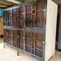 Kandang ayam bangkok dengan 4 pintu, tingkat atas bawah. Ukuran Kandang Ayam Bangkok 6 Pintu Kandang Ayam Bangkok Bang Kumis Posts Facebook Cara Membuat Kandang Ayam Bangkok Cara Membuat Kandang Ayam Bambu Kandang Bambu 6 Pintu Rakitan Tanpa Tulangan