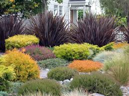 beautiful drought resistant front yard