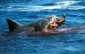 shark attack on humans. Beautiful Humans Inside Shark Attack On Humans A