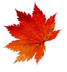 """Résultat de recherche d'images pour """"photo gratuite pixabay l'automne"""""""