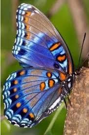 Pin by beatriz HAMM on Mariposas | Beautiful butterflies ...