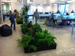 great office plants. What Makes For A Good Office Space/environment? Great Plants H