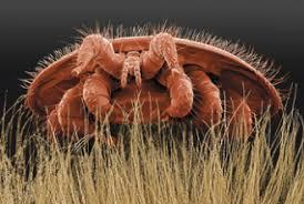 Varroa Mites Bee Health