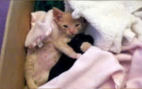 cute puppy and kitten best friends. Perfect Cute Kitten And Puppy Are Best Friends 5 Pics On Cute Puppy And Best Friends P