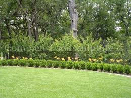 bushes are a nice way to hide a fence