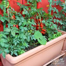 how to grow a container vegetable garden