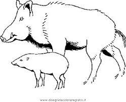 Disegno Cinghiale Animali Da Colorare