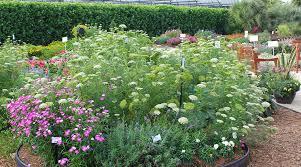 small space cut flower garden ideas