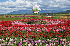 roosen garde tulip garden and sign