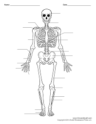 Human Anatomy Chart - Page 22 Of 202 - Pictures Of Human Anatomy Body
