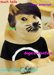 hello this is doge. dan turned into doge xd hello this is
