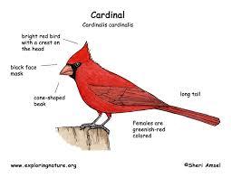 Small Picture cardinaldiagramjpg