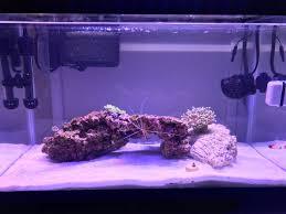 Saltwater Aquarium Lighting Guide Things To Consider Nano Reef Guide Reef2reef Saltwater