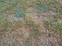 trugreen lawn service review 222204