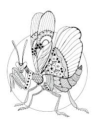 firefly coloring page firefly coloring page insect coloring book free printable firefly coloring pages firefly jar