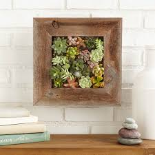 informal green wall indoors. Living Plant Wall Succulent Planter Kit | Vertical Container Gardening Informal Green Indoors O