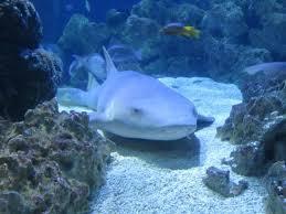 Sea life hannover eintrittspreise
