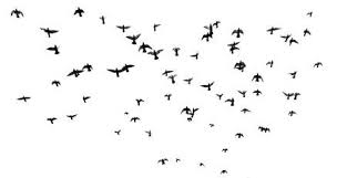 birds flying in the sky silhouette. Beautiful Birds Silhouettes Of Pigeons Many Birds Flying In The Sky Motion Blur Isolated  On To Birds Flying In The Sky Silhouette B