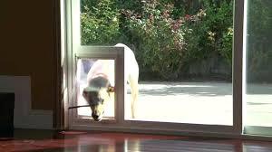 sliding door dog insert diy designs rooms decor and ideas covers sliding door dog