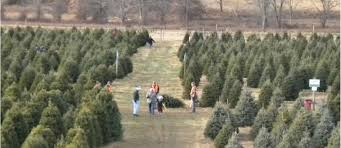 Where To Cut Your Own Christmas Tree Near Philly  Philadelphia Christmas Tree Cutting Nj