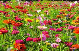 summer cut flower meadow garden