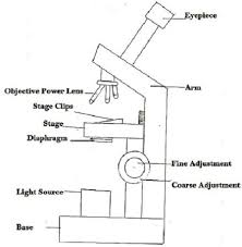 Types Of Microscopes Chart Difference Between Light Microscope And Electron Microscope