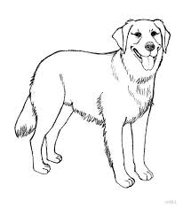 realistic puppy coloring pages. Delighful Realistic Golden Retriever Puppy Coloring Pages Printable  In Realistic Puppy Coloring Pages G