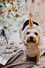 gift ideas for pet cute fun