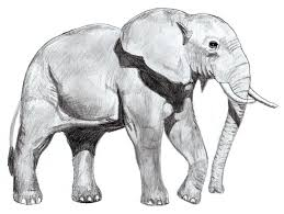 simple animal drawings in pencil. Contemporary Drawings Drawing An Elephant Step By For Simple Animal Drawings In Pencil N
