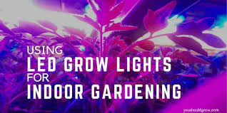 Using Full Spectrum <b>LED Grow</b> Lights For Indoor Gardening | You ...