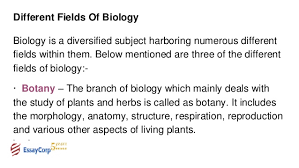 biology assignment help biology assignment sample essaycorp 3 different fields of biology
