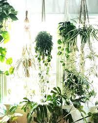 plant hangers indoors hanging plants best indoor ideas on macrame planter and outdoor idea hanging plant