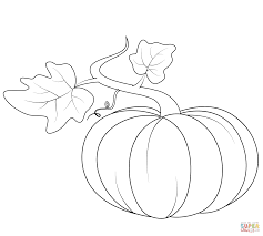 Small Picture Pumpkin Coloring Pages Templates Coloring Coloring Pages