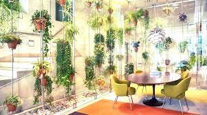 indoor office plants low