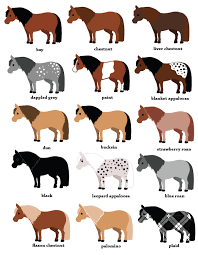 Here Is A Collection Of Pony Clipart Horse Breeds Horsey