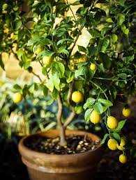 16 Fruit Trees For Zone 3 With Great Tasting Fruit  Joybilee FarmWhat Fruit Trees Grow In Michigan