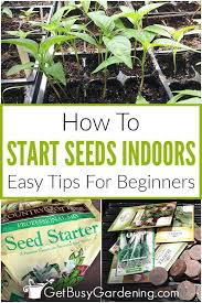 planting seeds indoors seed starting