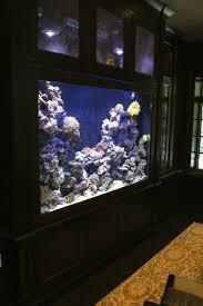 office aquariums. home aquarium ideas the buyers guide 350 gallon saltwater reef built in to office aquariums