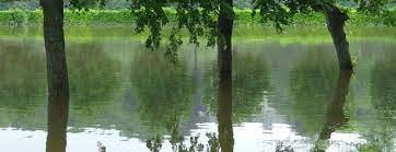 draining your garden with a sump pump