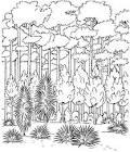 Распечатать раскраску лес