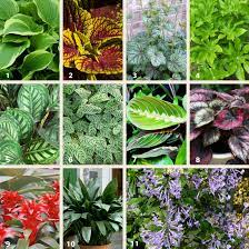 shade plants for small gardens flower