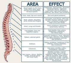 Spinal Dermatomes Chart Pin On Shit For My Lower Back