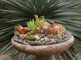 Small Picture Succulent Gardens Ideas Elegant Indoor Succulent Diy Project