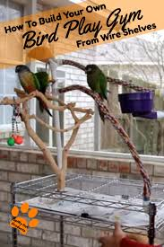 how to build your own bird play gym with wire shelving