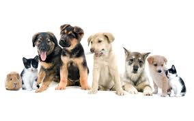 dogs and cats wallpaper. Simple Wallpaper 2560 X 1600 To Dogs And Cats Wallpaper
