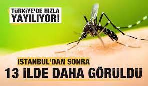 Asya Kaplan Sivrisineği İstanbul'dan sonra 13 ilde daha görüldü - GÜNCEL  Haberleri
