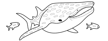 Small Picture animals shark shark coloring page throughout shark coloring pages